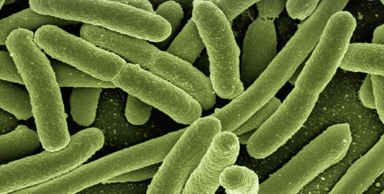 The microbiome: a perfect relationship