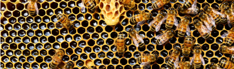 The curious case of the missing bees